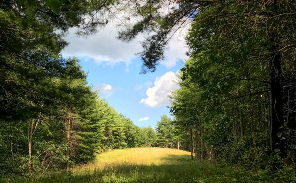 A field surrounded by evergreen trees at Stewarts Creek